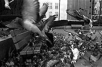 Man feeding pigeons, 1987.   &amp;#xA;<br />