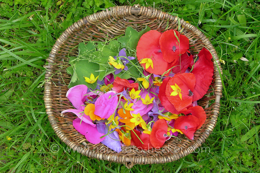 Kinder haben verschiedene, bunte Blumen, Blüten, Blütenblätter und Blätter gesammelt, um sie zu pressen, Botanikpresse, Blumenpresse