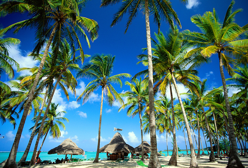 Dominican Republic, Punta Cana, Bavaro Beach. Palm trees Caribbean Sea