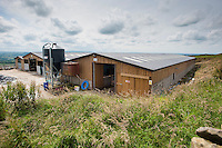 Wooden farm cubicle house for Holstein dairy cows, Lancashire.