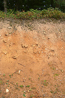 Soil detail. Sand. Calcareous. Chateau de Tracy, Pouilly sur Loire, France