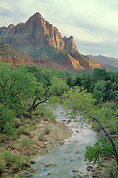 Fremont cottonwoods line the Virgin River<br />   and the Watchman,  Zion Canyon<br /> Zion National Park<br /> Colorado Plateau,  Utah