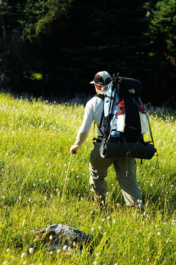 Man hiking through meadow near Cream Lake, Bailely Range, Olympic Mountains, Olympic National Park, Washington