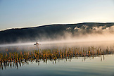 USA, Oregon, Paulina Lake, Brown Cannon, a fisherman goes through the reeds and fog in his boat