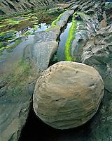 Sandstone boulder at Shore Acres State Park Oregon