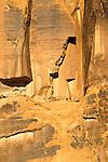 Slickrock detail, Arches National Park