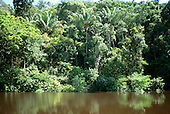 Amazonas State, Brazil. Dense mixed tropical rainforest vegetation rising from the river bank; Rio Negro.