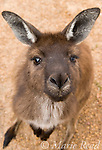 AUSTRALIAN Mammals, Reptiles