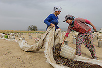 TURKEY: agriculture