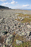 Küste, Nordmeer, Eismeer, flechtenbewachsenes Geröll, Flechten, Atlantik, Norwegen, Nord-Norwegen, Nordnorwegen, Lappland, Varanger, Coastal rocks, North Sea, Arctic Ocean, Atlantic, Norway, Northern Norway, Lapland, Varanger