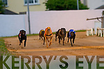 WINNING DOG: Steeple Rd Bill No. 1 winner of the Select Bia Fastfood Restaurant 525 at the Kingdom Greyhound Stadium on Friday, 2nd was Mystery Lady No. 2 and 3rd was Oak Spark No. 6.   Copyright Kerry's Eye 2008