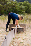 San Francisco Garter Snake (Thamnophis sirtalis tetrataenia) researcher Michelle Thompson checking funnel trap at end of drift fence for caught snakes, Pescadero, California