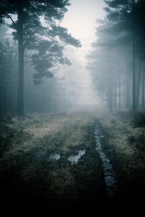 forest track in mist at daybreak in winter