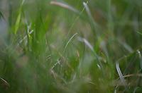 Grass Detail Outside Nana's House, Castine, Maine, US