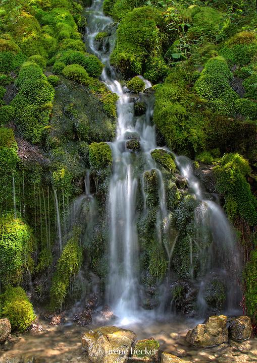 Izvor Ladjevac, Tara National Park, Serbia.