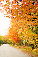 Fall color along a Marquette County road near Big Bay in Michigan's Upper Peninsula.