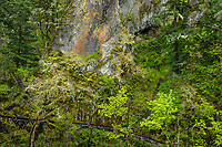 Wall, Shepard's Dell, Columbia Gorge, Oregon