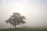 Europa, DEU, Deutschland, Rheinland Pfalz, Naturpark Saar-Hunsrueck, Typische Landschaft, Morgenstimmung, Nebel, Nebelschwaden, Dunst, Baum, Apfelbaum, bei Sonnenaufgang, Kategorien und Themen, Natur, Umwelt, Landschaft, Jahreszeiten, Stimmungen, Landschaftsfotografie, Landschaften, Landschaftsphoto, Landschaftsphotographie, Naturschutz, Naturschutzgebiete, Landschaftsschutz, Biotop, Biotope, Landschaftsschutzgebiete, Landschaftsschutzgebiet, Oekologie, Oekologisch, Typisch, Landschaftstypisch, Landschaftspflege....[Fuer die Nutzung gelten die jeweils gueltigen Allgemeinen Liefer-und Geschaeftsbedingungen. Nutzung nur gegen Verwendungsmeldung und Nachweis. Download der AGB unter http://www.image-box.com oder werden auf Anfrage zugesendet. Freigabe ist vorher erforderlich. Jede Nutzung des Fotos ist honorarpflichtig gemaess derzeit gueltiger MFM Liste - Kontakt, Uwe Schmid-Fotografie, Duisburg, Tel. (+49).2065.677997, ..archiv@image-box.com, www.image-box.com]