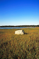 Marsh grass and boulder.