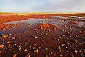 Australia, South Australia; stony desert near Dalhousie Springs after rain