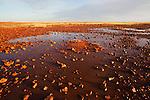 Australia, South Australia; stony desert near Dalhousie Springs after rain