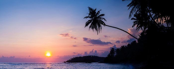 Panoramic Photo Of A Palm Tree At Sunset On Mirissa Beach South Coast Sri