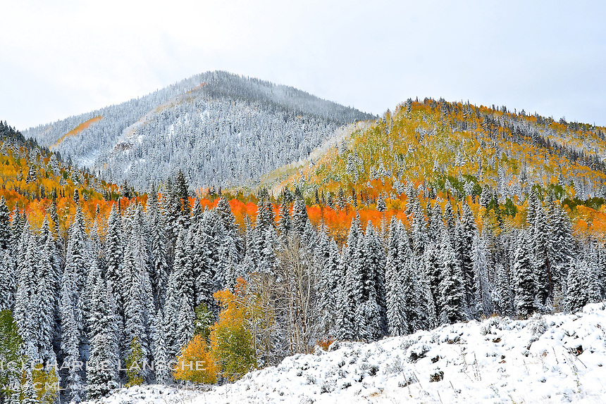 Autumn colors yield to the season's first snowfall in the Uinta Mountains.   October 2011.