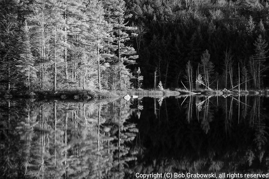 Trees reflected in Whortleberry Pond at sunset in the Adirondack Mountains in New York State