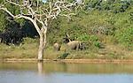 Yala National Park Sri Lanka<br /> Elephant