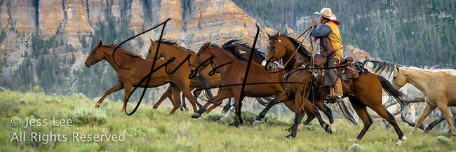 Cowboy running with horses in Wyoming\'s bear tooth mountains. Cowboys working and playing. Cowboy Cowboy Photo Cowboy, Cowboy and Cowgirl photographs of western ranches working with horses and cattle by western cowboy photographer Jess Lee. Photographing ranches big and small in Wyoming,Montana,Idaho,Oregon,Colorado,Nevada,Arizona,Utah,New Mexico.