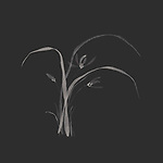 Elegant Japanese Zen art floral design in modern colors of flowers and leaves of a wild orchid artistic illustration on dark gray almost black background
