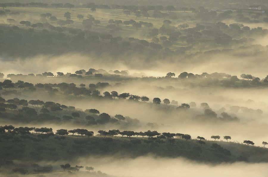 Dehesa landscape, Monfrague National Park, Extremadura, Spain.