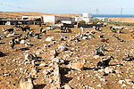 Goats corralled together in small farm, Tindaya, Fuerteventura, Canary Islands, Spain