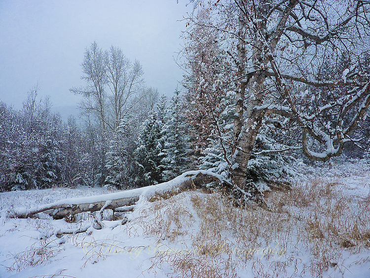 Looking like a Christmas card this winter landscapes of the forest offers hints of color in an otherwise white world.