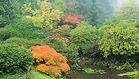 Japanese Garden in mist, Washington