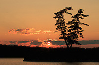 &quot;Twin Pine Sunset&quot;<br />