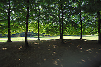 Lime trees in the sun at a park in Mestre, Italy.