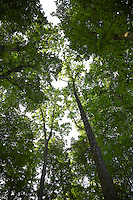 FOREST_LOCATION_90103