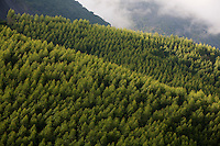 Muniz Freire_ES, Brasil...Paisagem com plantacao de eucalipto ao lado da estrada ES 181...The landscape with eucalyptus plantation near ES 181 road...Foto: LEO DRUMOND / NITRO