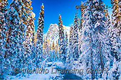Tom Mackie, CHRISTMAS LANDSCAPES, WEIHNACHTEN WINTERLANDSCHAFTEN, NAVIDAD PAISAJES DE INVIERNO, photos,+British Columbia, Canada, Canadian, Canadian Rockies, Mt. Burgess, North America, Tom Mackie, USA, Yoho National Park, blue,+cold, freeze, freezing, frozen, holiday destination, horizontal, horizontals, landscape, landscapes, mountain, mountainous, m+ountains, national park, pine tree, pine trees, river, riverside, season, snow, snow-covered, tourist attraction, travel, tre+e, trees, weather, white, winter, wintery,British Columbia, Canada, Canadian, Canadian Rockies, Mt. Burgess, North America, T+,GBTM170011-2,#xl#