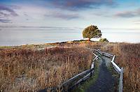 Pacific Madrone tree and trail through prairie, Westside Preserve, San Juan Island, Washington, USA