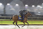 November 1, 2018: Marley's Freedom, trained by Bob Baffert, exercises in preparation for the Breeders' Cup Filly & Mare Sprint at Churchill Downs on November 1, 2018 in Louisville, Kentucky. Jamey Price/Eclipse Sportswire/CSM