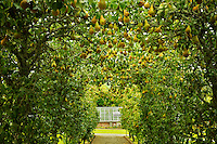 Pear arbor and path in the Gardens at the Dromoland Castle, Ireland