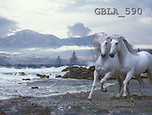 Bob, ANIMALS, collage, horses, photos(GBLA590,#A#) Pferde, caballos