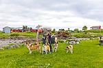 Lundehund, Norwegian Puffin Dogs, in Vega, Norway, Europe
