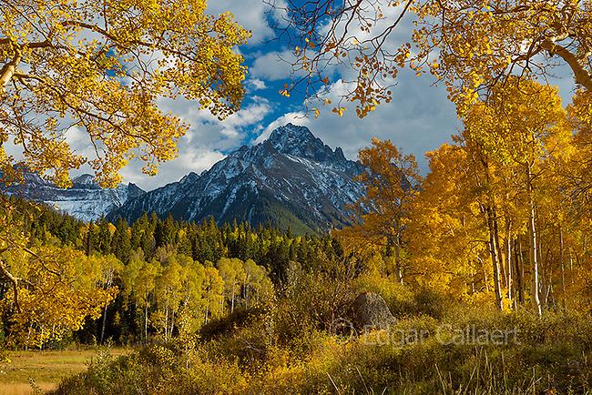 Aspen, Populus Tremula, Mount Sneffels, Dallas Divide, Uncompahgre National Forest, Colorado
