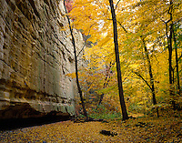 Starved Rock State Park, IL<br /> Sandstone wall of Ottawa Canyon and fall colored