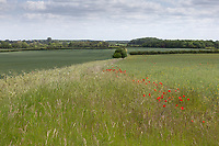 Field margin <br /> ©Tim Scrivener Photographer 07850 303986<br />      ....Covering Agriculture In The UK....