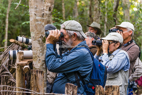 Birdwatchers looking for Blue-headed Quail-Doves (Starnoenas cyanocephala) and other endemics in  Bermejas Forest Reserve, Cuba.