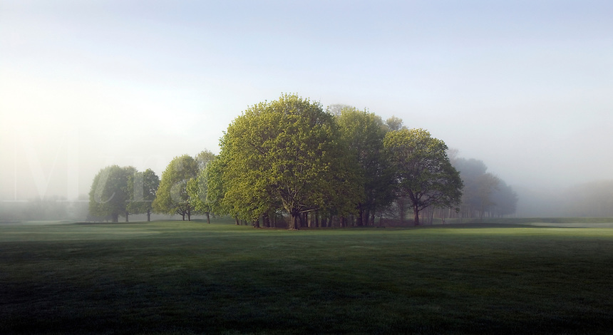 Stand of trees in early morning fog. Rhode Island Country Club, Barrington, Rhode Island.